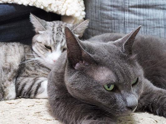 くっつく猫