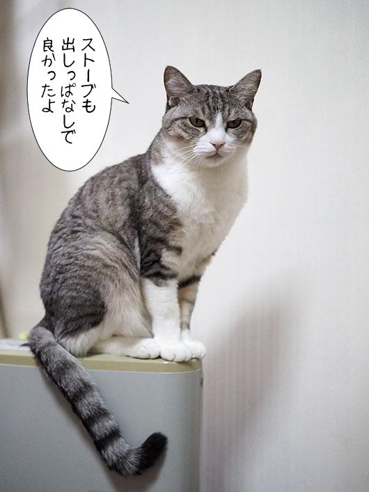 ストーブの上の猫