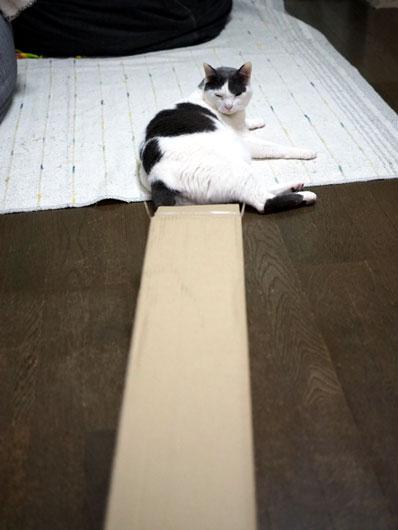 箱を眺める猫