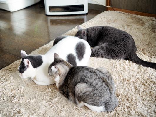 ストーブの前の猫