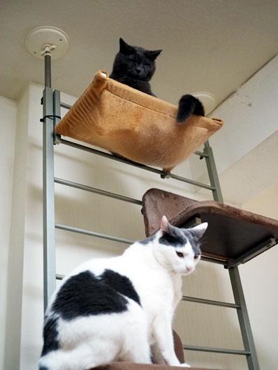 キャットウォークと猫