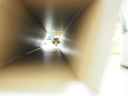 トンネルの先の猫
