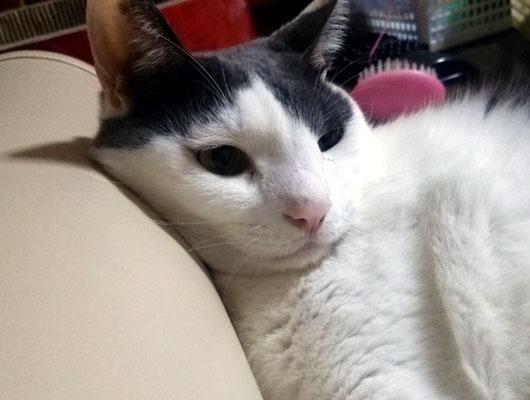 ストレッチポールと猫