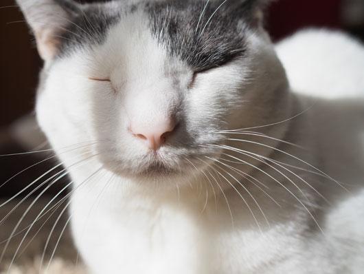 ひげの長い猫