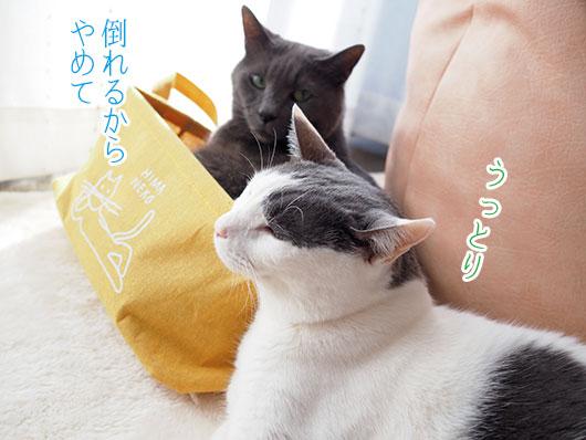 グレ猫とハチワレ