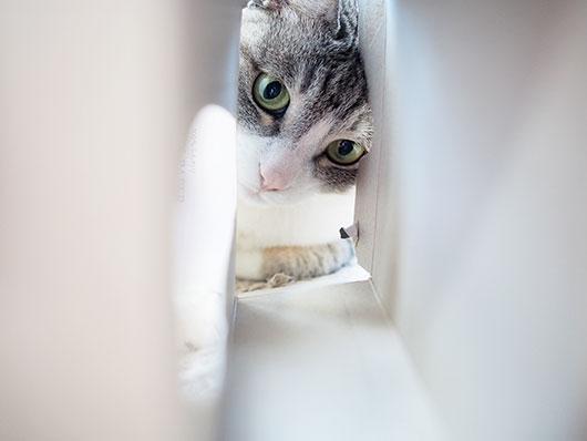 ティッシュボックスと猫