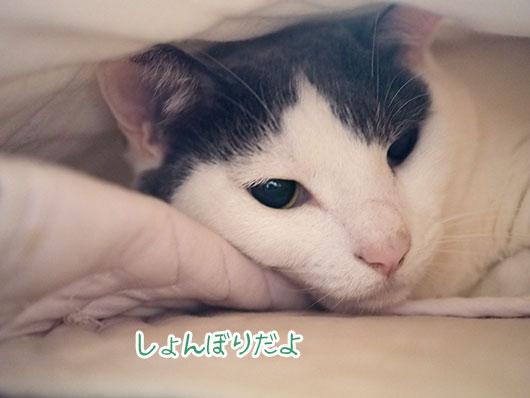 しょんぼりな猫