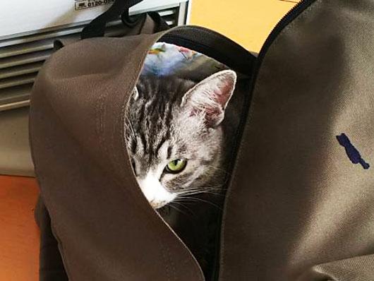 リュックに入る猫