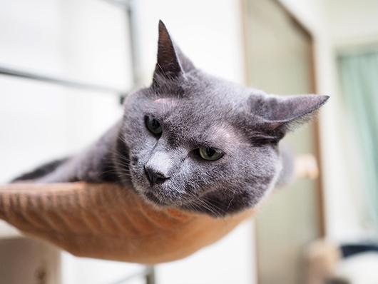 ハンモックの猫