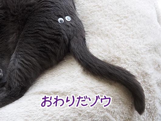 猫のしっぽ
