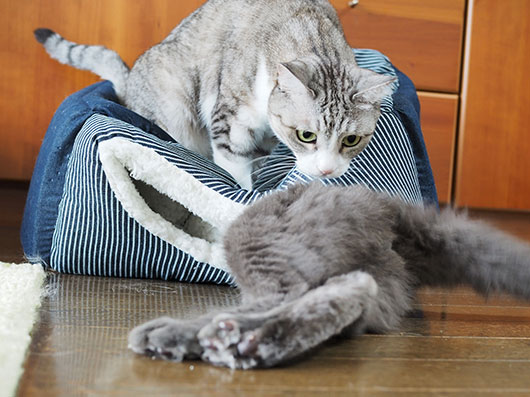 キャットハウスから脱出する猫