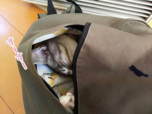 リュックで眠る猫