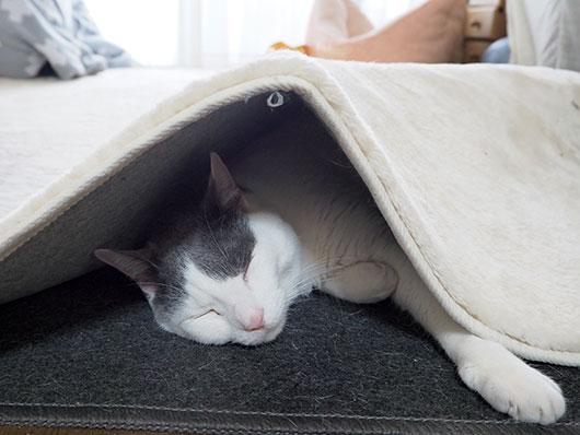 寒くて動けない猫