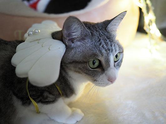 くぅにゃん天使