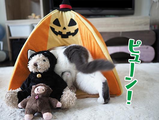 タリーズコーヒーの黒猫ちゃん