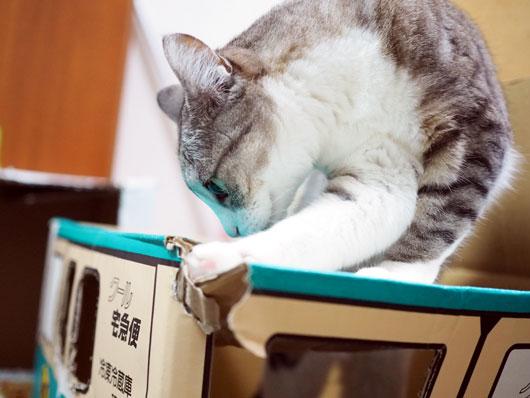 クロネコヤマトと猫