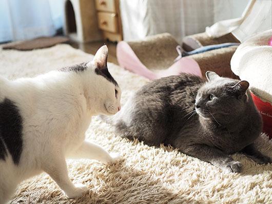 ケンカをする猫