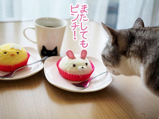 ケーキを狙う猫