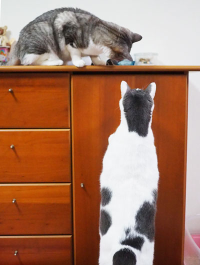 中が気になる猫