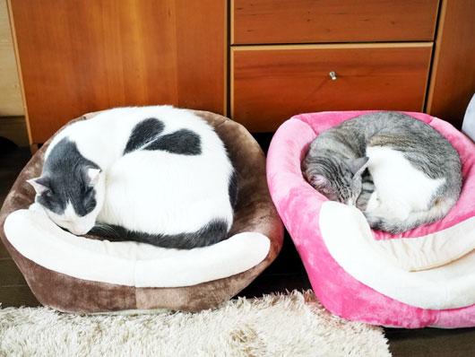 キャットハウスで眠る猫