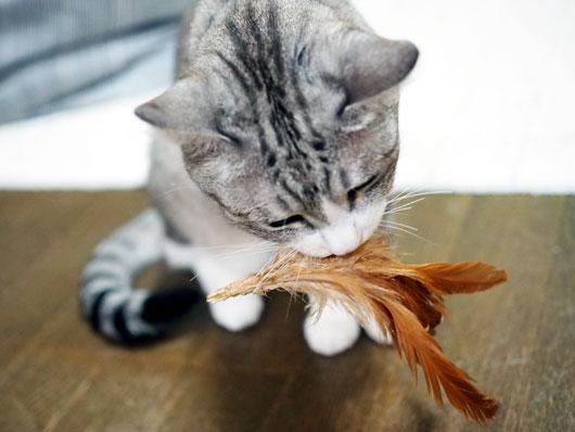 羽をくわえる猫