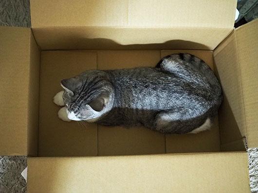 箱の中の猫