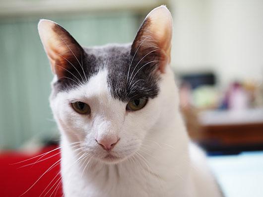 しょんぼりの猫