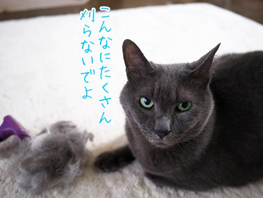 ターミネーターする猫