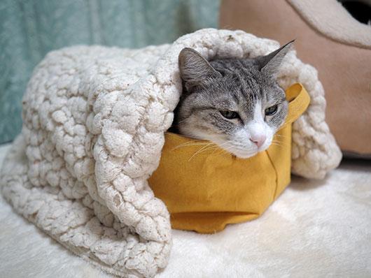 寒い日の猫