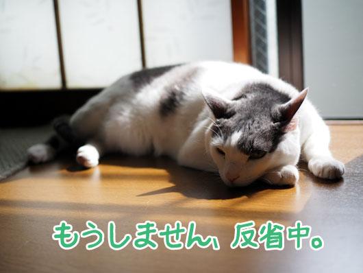 反省する猫