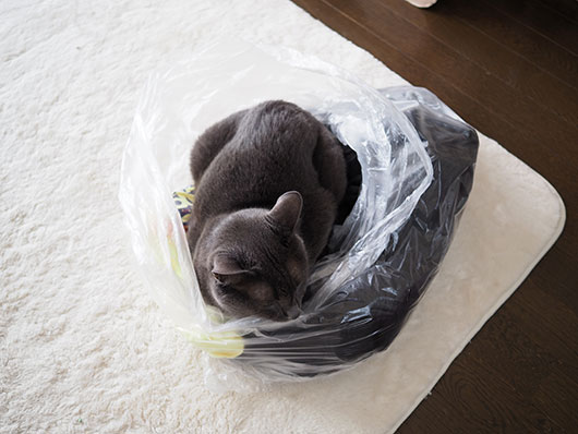 断捨離と猫