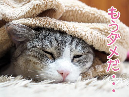寒がりの猫