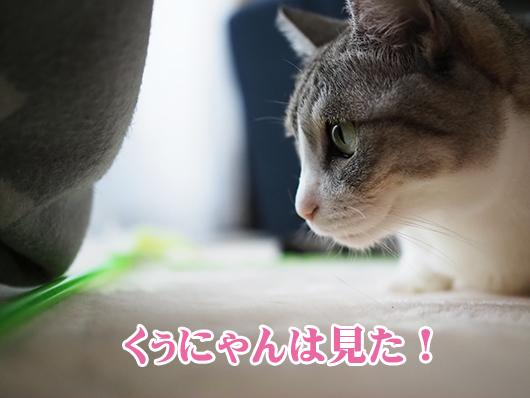 のぞき見する猫