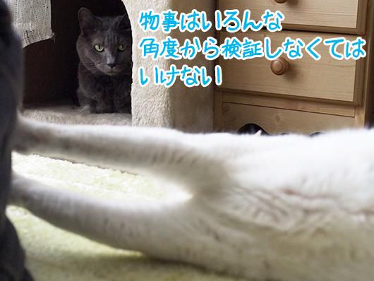 分析する猫