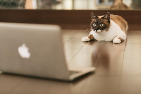 パソコン-猫-CAT9V9A9159_TP_V4