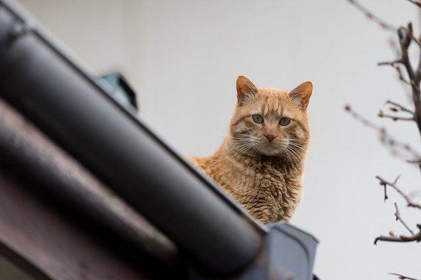 猫はネットで騒がれすぎ