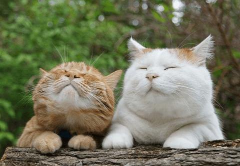動物】癒しの動物画像♡ : ぺっと...