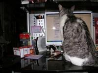ニャーちゃんとパソコン