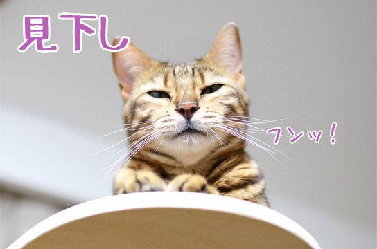 新パンチラ part01 [転載禁止]©bbspink.comYouTube動画>1本 ->画像>529枚