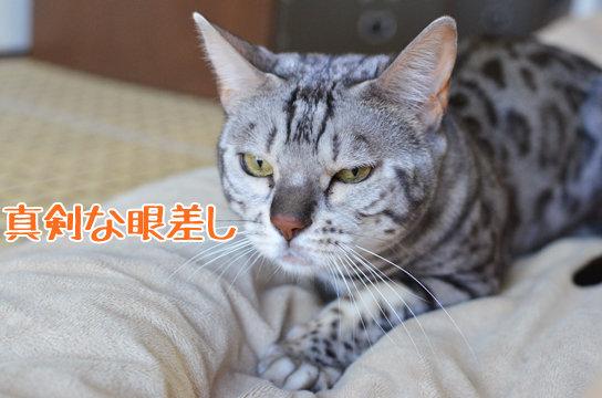 猫は和室で飼えますか? | リフォーム相談プロ