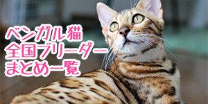 ベンガル猫ブリーダー子猫