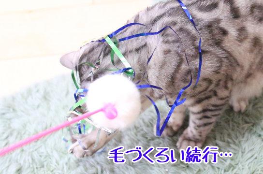 ベンガル猫