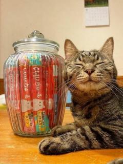 癒し度満点の猫ちゃんの笑顔にほっこり!満足顔の理由に13万人がニッコリ「冷凍庫にアイスいっぱいあるときの私と同じ顔」