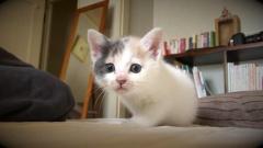 興味津々の子猫がじわじわ近づいてくる様子が可愛すぎる♡