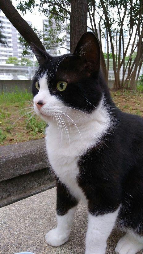 おひさまの好きな猫の種類!!