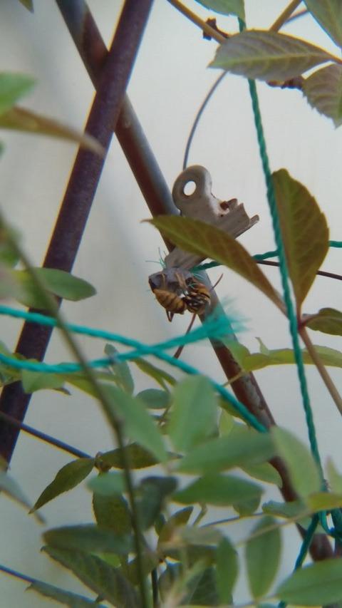 ハチを移動