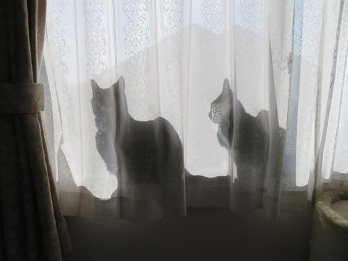 いつもと違う窓辺