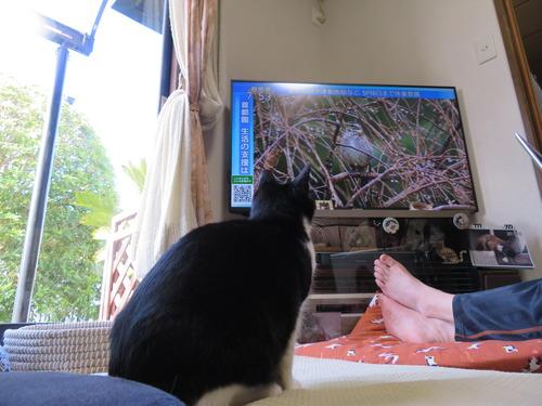TVを見る