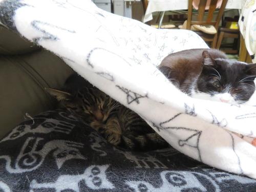 毛布の中に