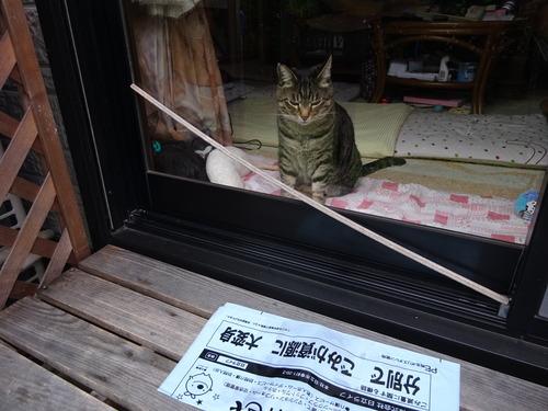 数分窓辺に居ましたが